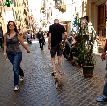 pet pig in rome